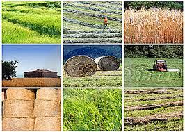 پاور پوینت سیاست وتوسعه کشاورزی